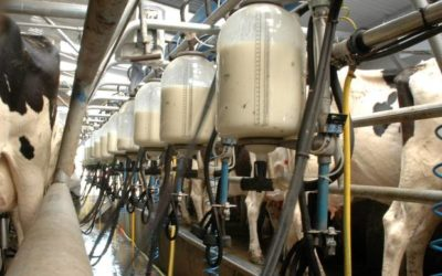 COMMENTARY: AFRICAN DAIRY SECTOR THE NEXT BIG THING