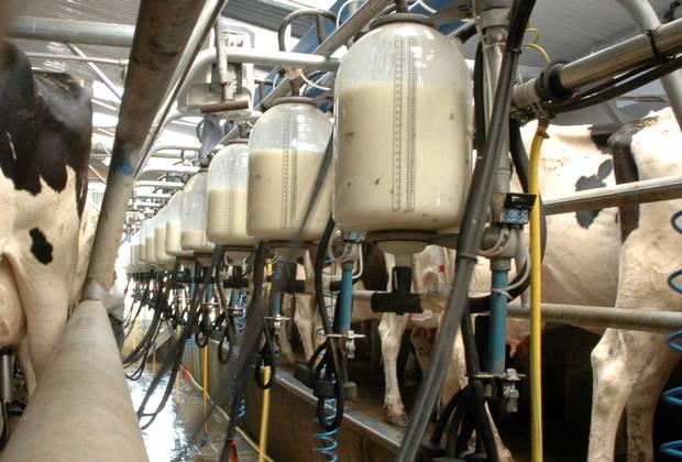 Resulta Project Engineering IL Milk Recording Jars