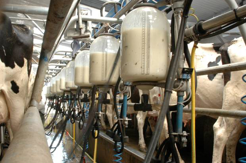African Dairy Sector